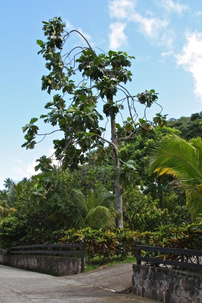 Saint Lucia, Rabot Estate, Saint Lucia by Stephanie Sadler