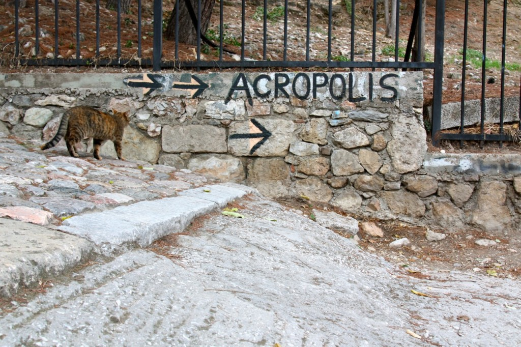 Stray Cats of Athens by Stephanie Sadler