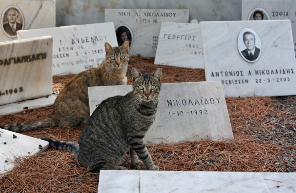 Stray cats in Athens by Stephanie Sadler