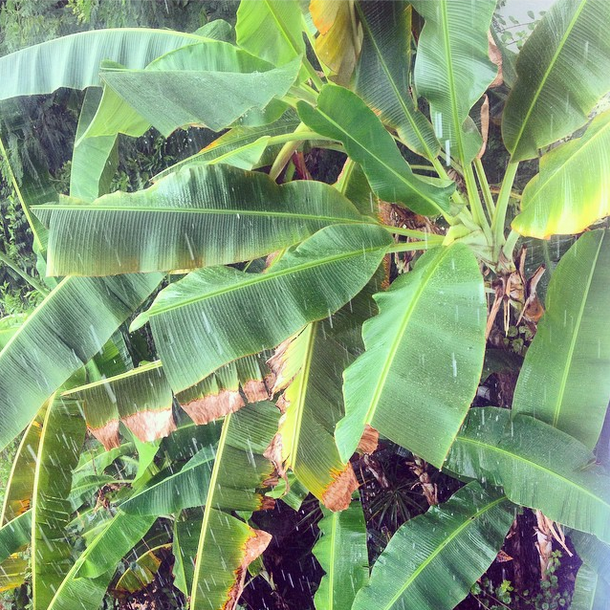 Rain, St. Lucia