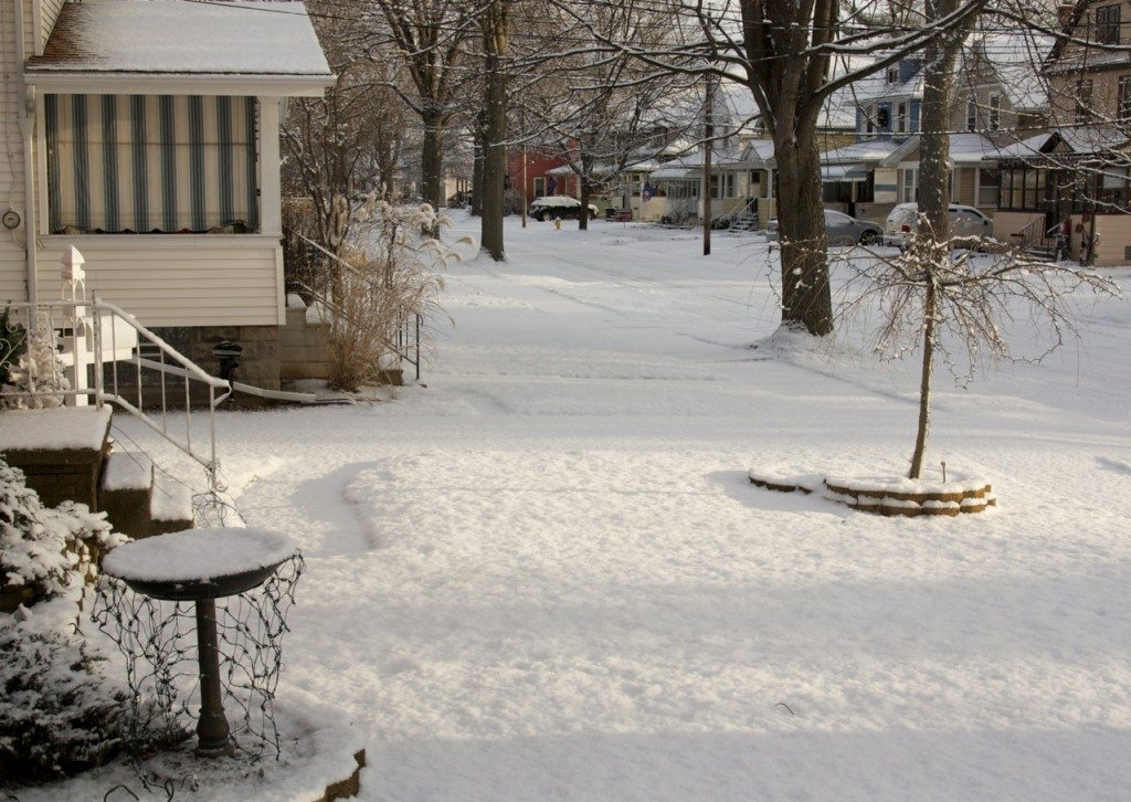 North Tonawanda, Snow, Stephanie Sadler, Little Observationist