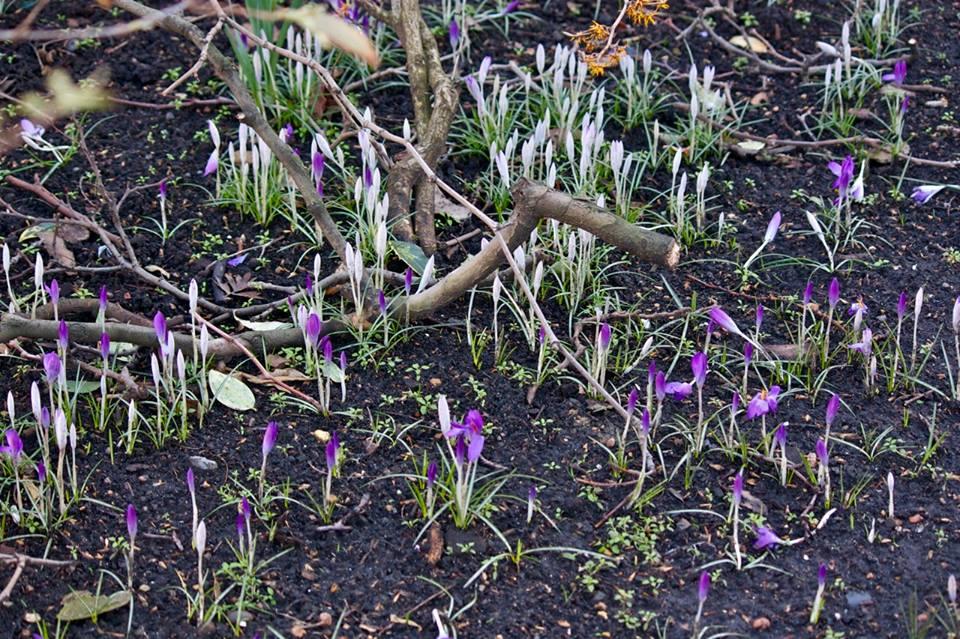 Spring in London, Stephanie Sadler, Little Observationist