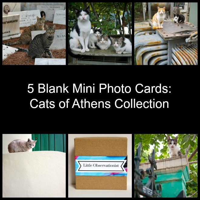 Little Observationist Mini Photo Cards - Cats of Athens Collection