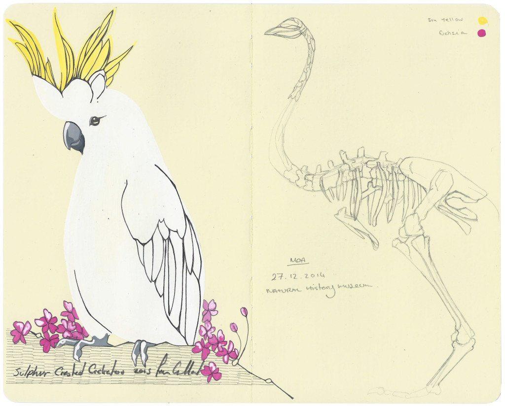 Cockatoo - - Fran Giffard Interview, Little Observationist