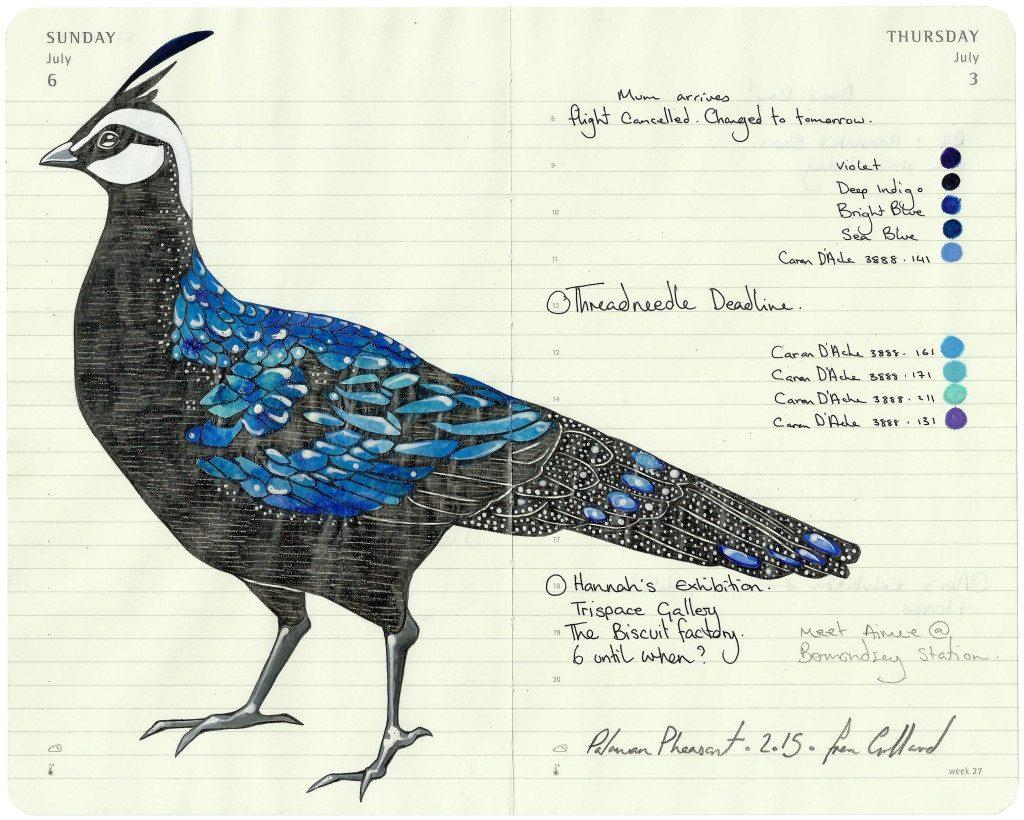 Palawan Pheasant - - Fran Giffard Interview, Little Observationist