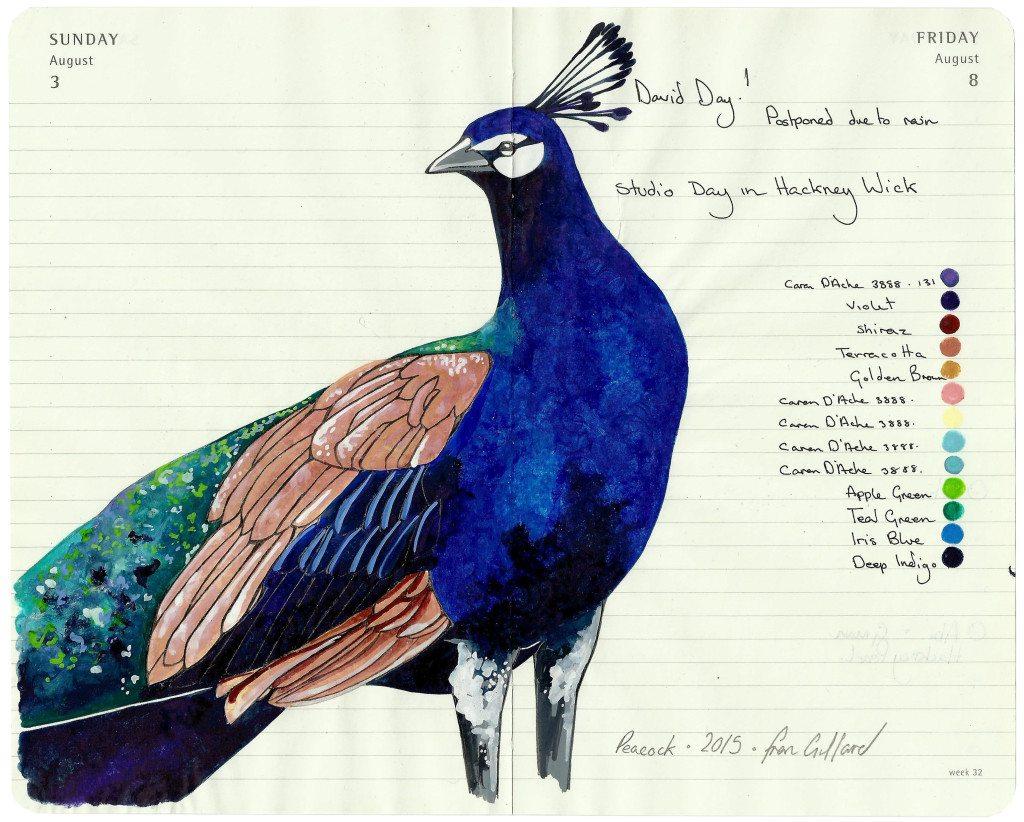 Peacock - - Fran Giffard Interview, Little Observationist