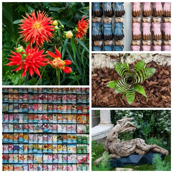 Chelsea Flower Show 2015 by Stephanie Sadler, Little Observationist 23.jpg