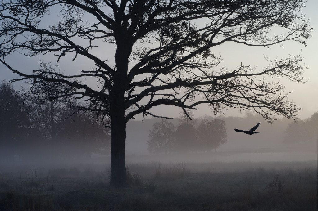 4 - Spooky Morning by Ida Hollis via Little Observationist