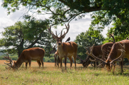 Richmond Park, London, by Stephanie Sadler, Little Observationist