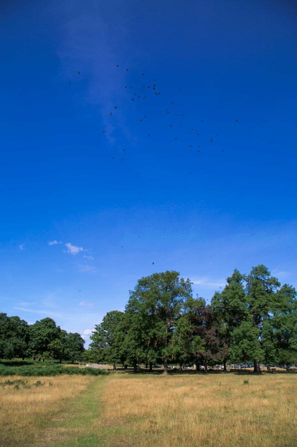 Richmond Park, London, by Stephanie Sadler, Little Observationist