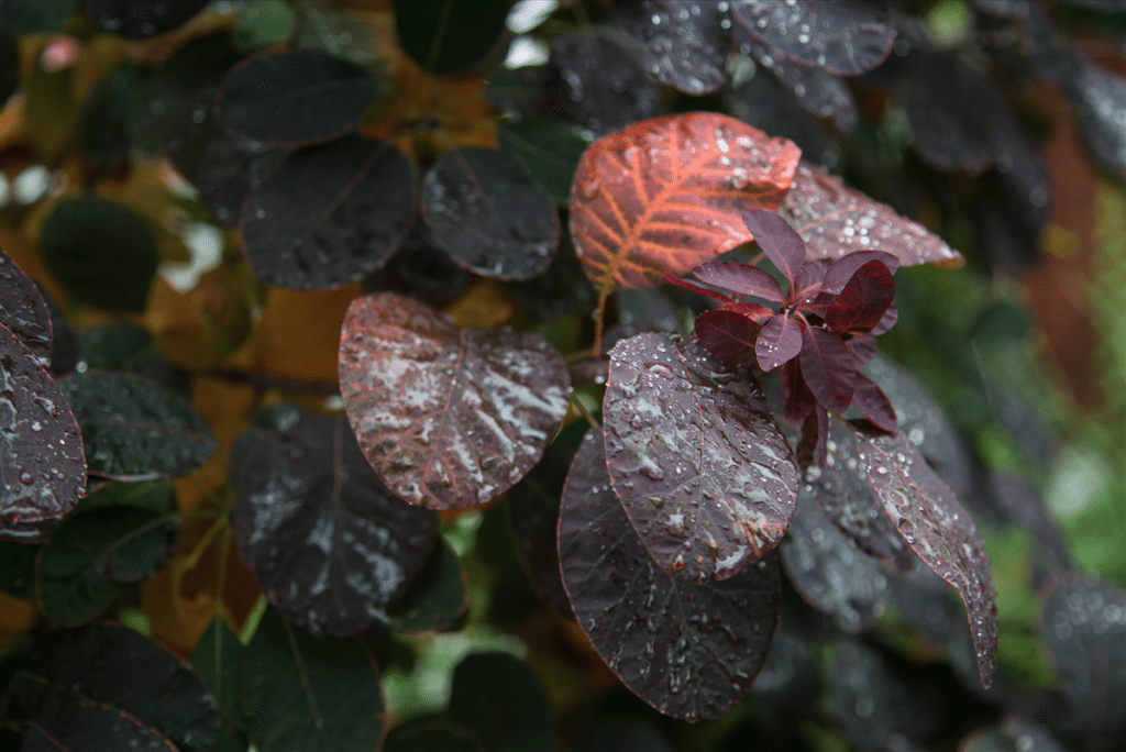 Autumn Rain by Stephanie Sadler, Little Observationist
