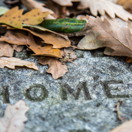 London Cemeteries by Stephanie Sadler, Little Observationist