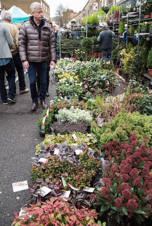 Columbia Road Flower Market, London by Stephanie Sadler, Little Observationist