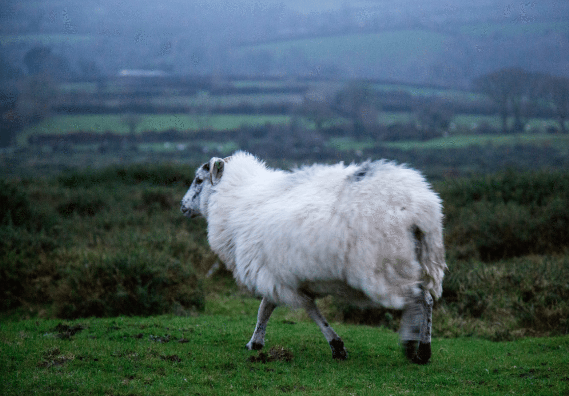 Dartmoor National Park, by Stephanie Sadler - Little Observationist