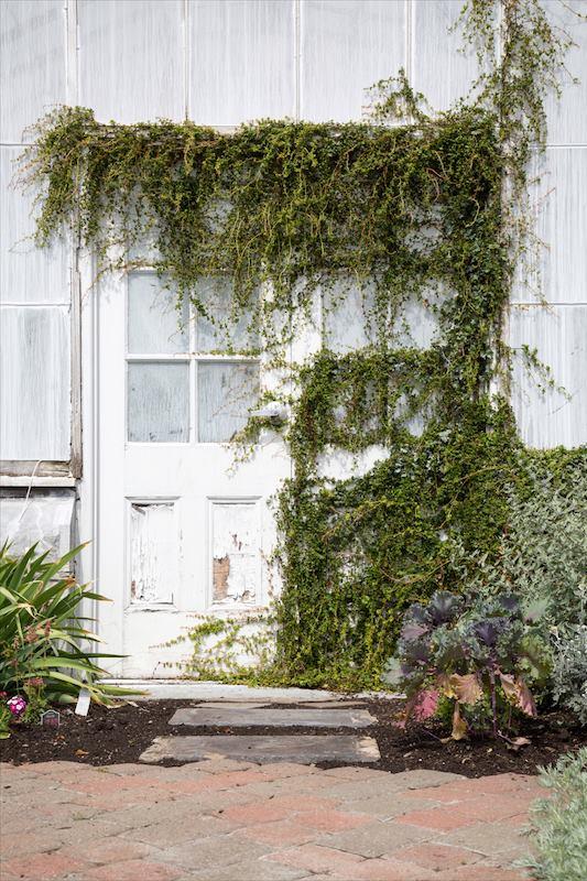 Buffalo Botanical Gardens by Stephanie Sadler, Little Observationist