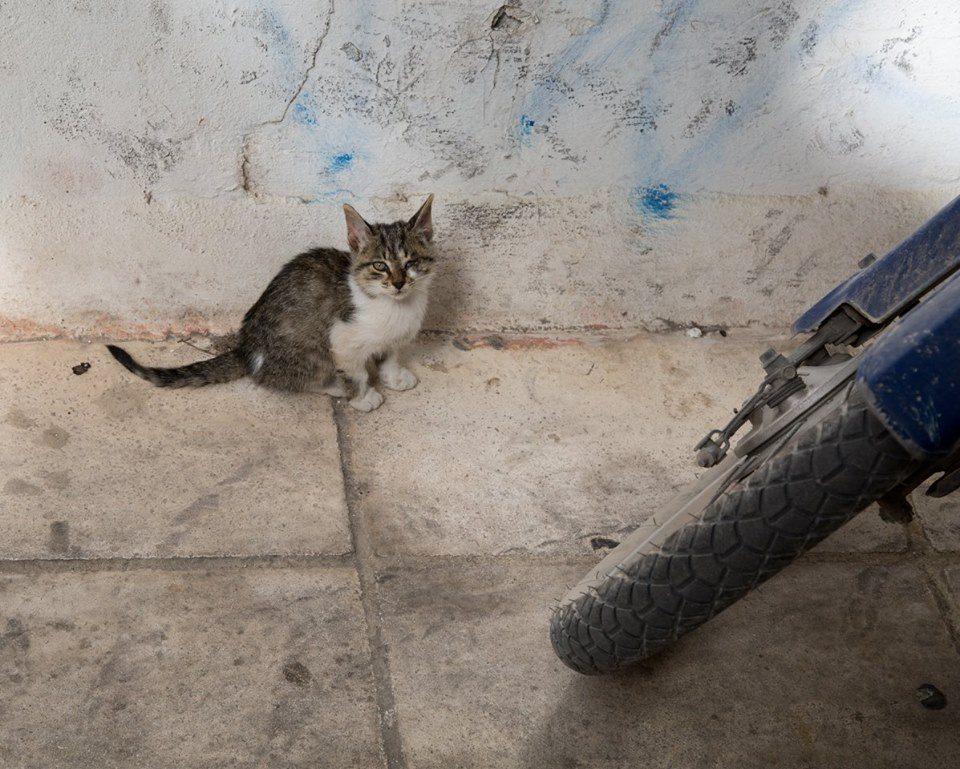 Fira, Santorini, Greece by Stephanie Sadler, Little Observationist
